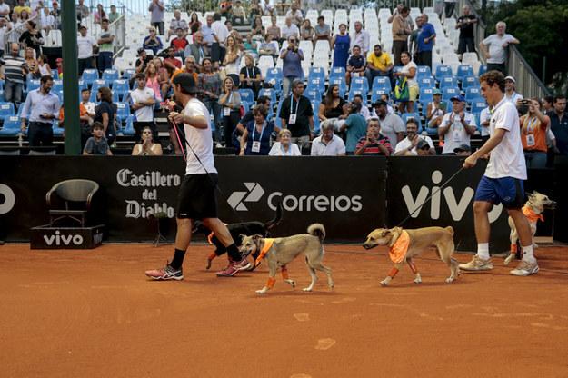 """A 4 perros callejeros brasileños se les dio una nueva posibilidad de vida cuando fueron entrenados para ser perros """"peloteros"""" para el Opening de Brasil."""