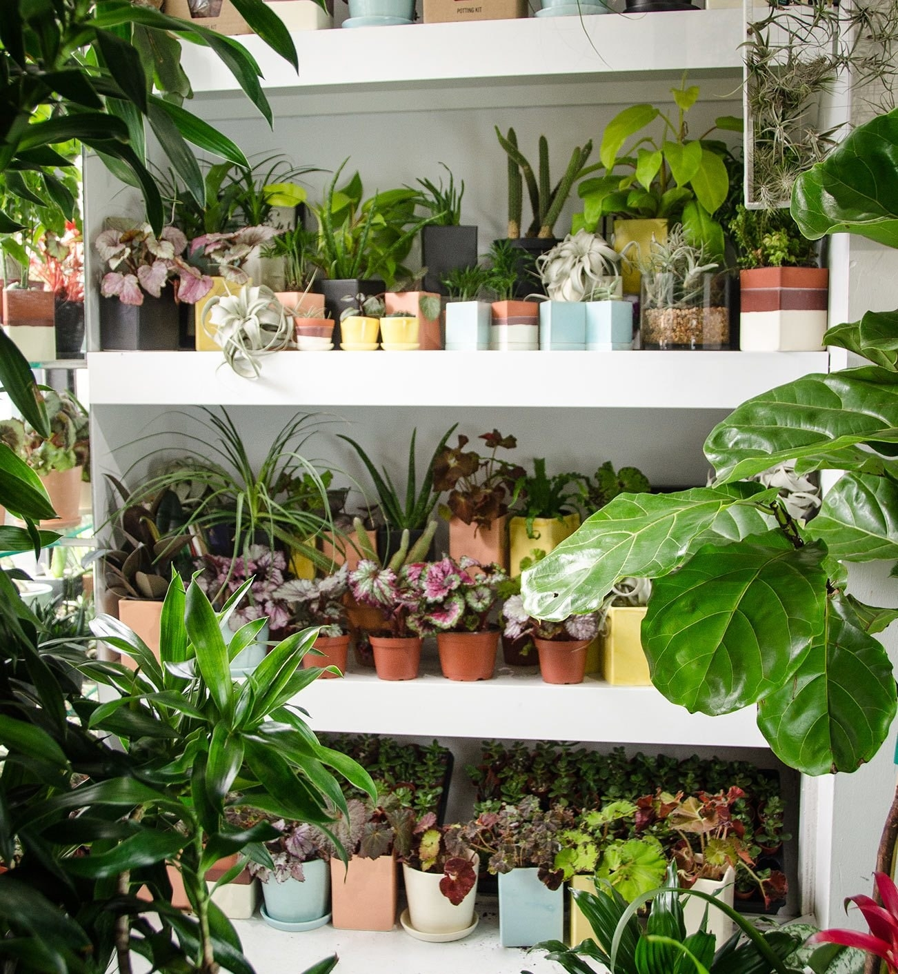 Unusual House Plants For Sale 18 Of The Best Places To Buy Houseplants Online