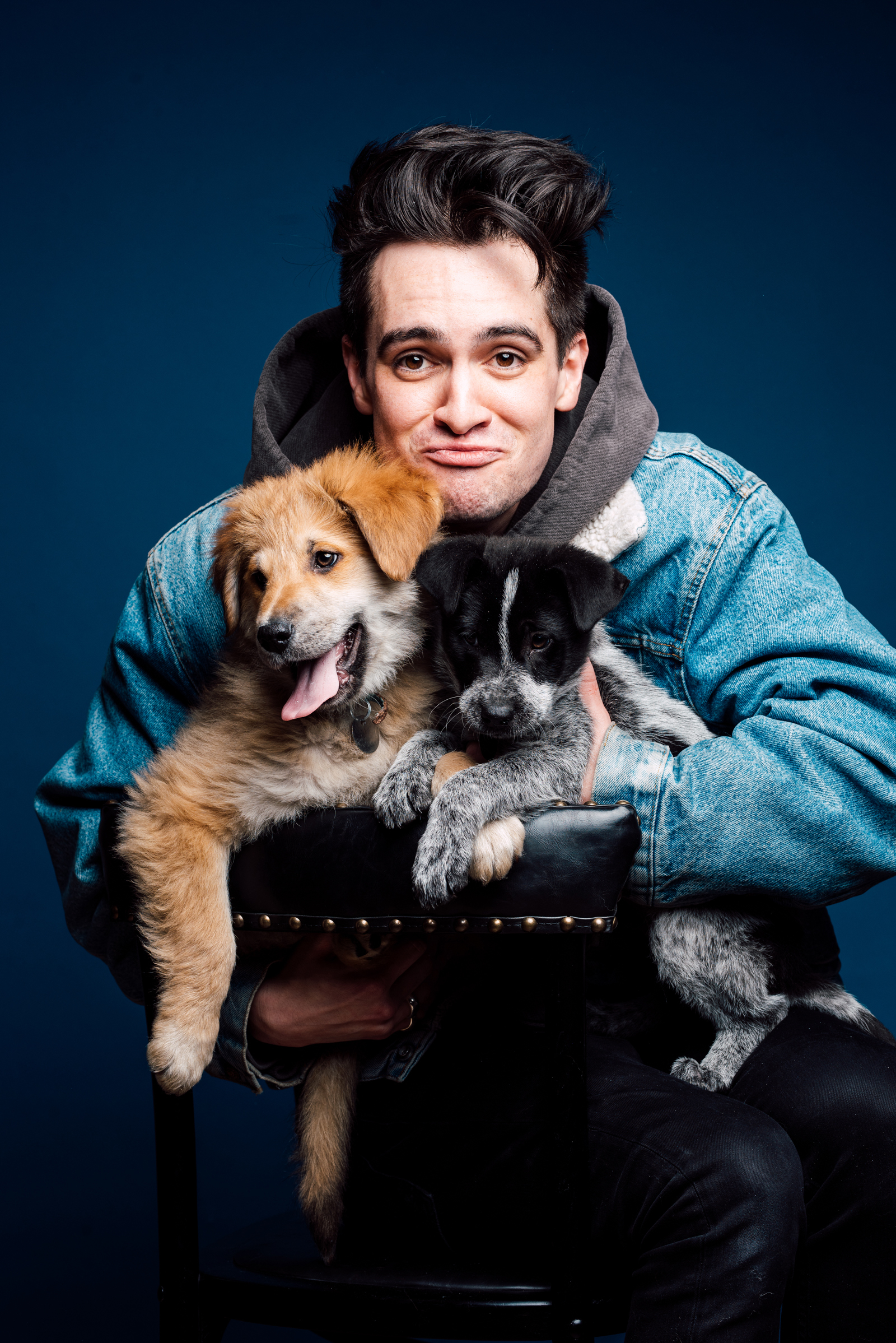 Fall Out Boy And Panic At The Disco Wallpaper Brendon Urie Played With Puppies While Answering Fan