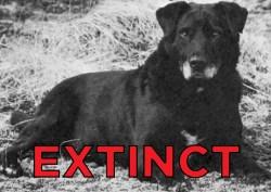 Small Of Extinct Dog Breeds