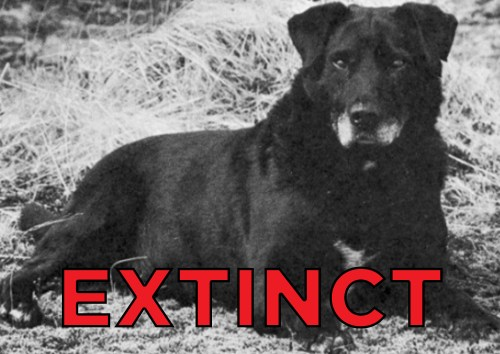 Breathtaking Water Dog Se Extinct Dog Breeds Were Goodest Boyes Yesteryear Extinct Dog Breeds Near Extinct Dog Breeds
