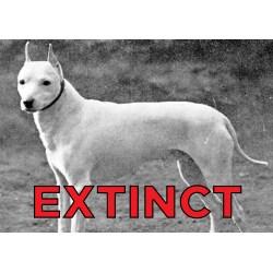 Small Crop Of Extinct Dog Breeds