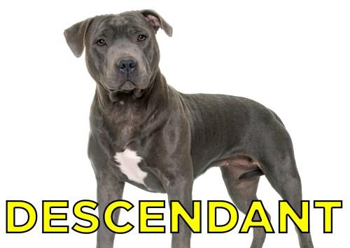 Sophisticated Yesteryear Extinct Fighting Dog Breeds Largest Extinct Dog Breeds Share On Facebook Share Se Extinct Dog Breeds Were Goodest Boyes