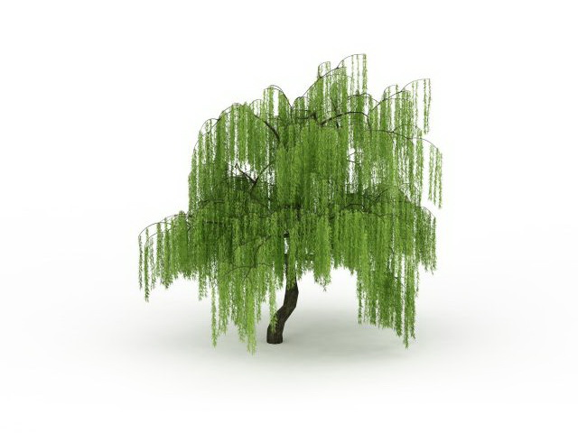 3d Fruit Wallpaper Weeping Willow Tree 3d Model 3ds Max Files Free Download