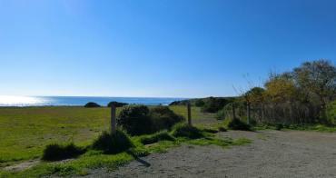 ▌美西自駕景點 ▌加州一號公路『Piedras Blancas海象灘』超多躺在沙灘上做日光浴懶洋洋的海獅群
