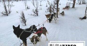 影音 真實感受狗拉雪橇穿梭在Abisko極地森林裡的快感
