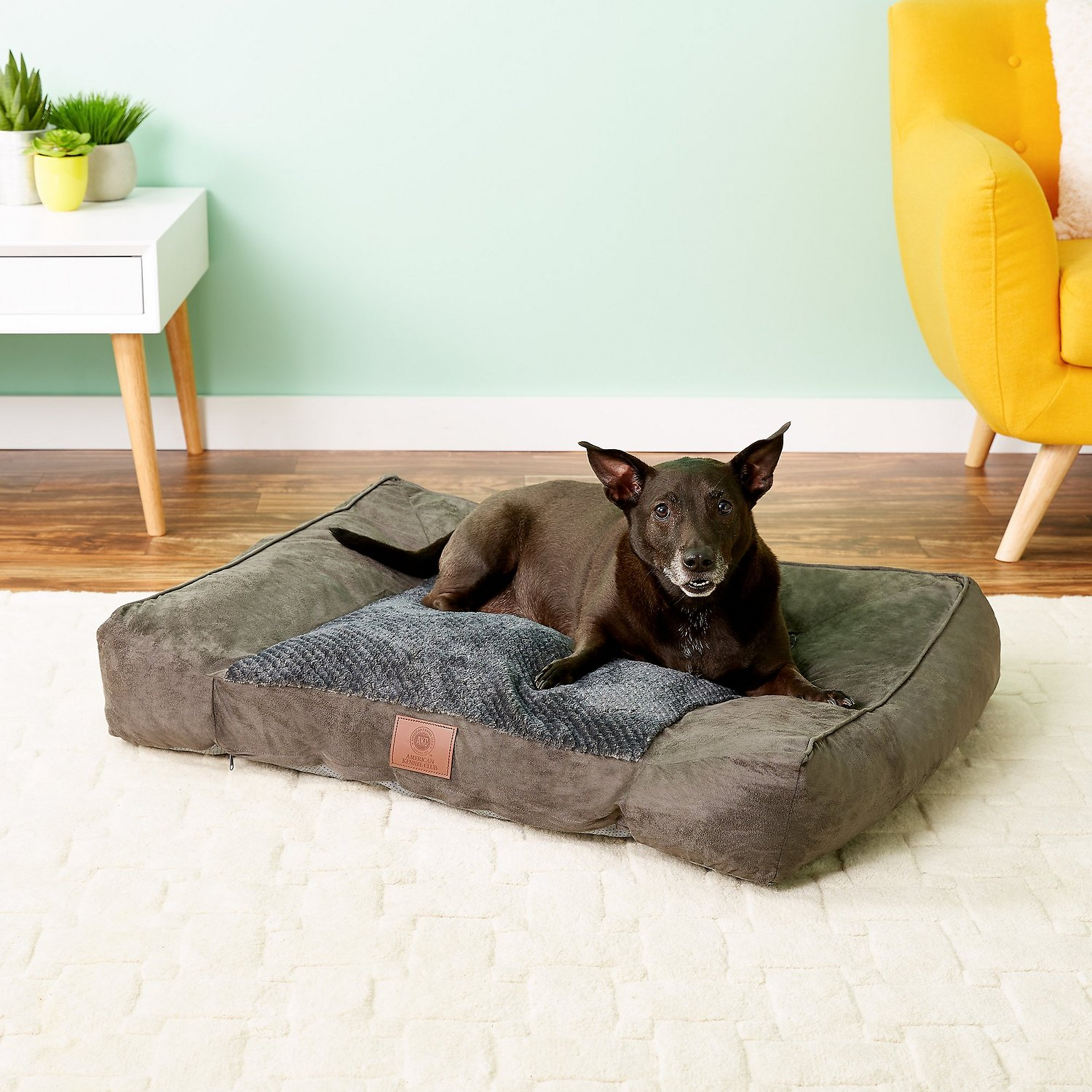 Sofa Foam Inserts Dog Beds Mats Small To Large Low Prices Free Shipping Chewy