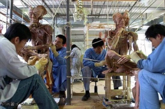 Hagens' employees making human cadavers.