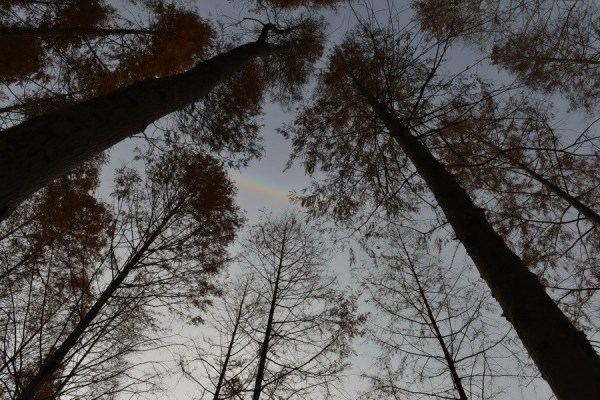 The upside down rainbow.