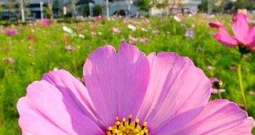 《台中景點》國立圖書館旁的小花海~粉色波斯菊隨風搖,療癒力十足!