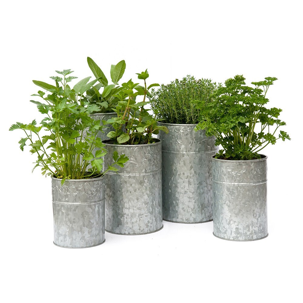 Planter For Herbs Herbs And Galvanised Planter Combination