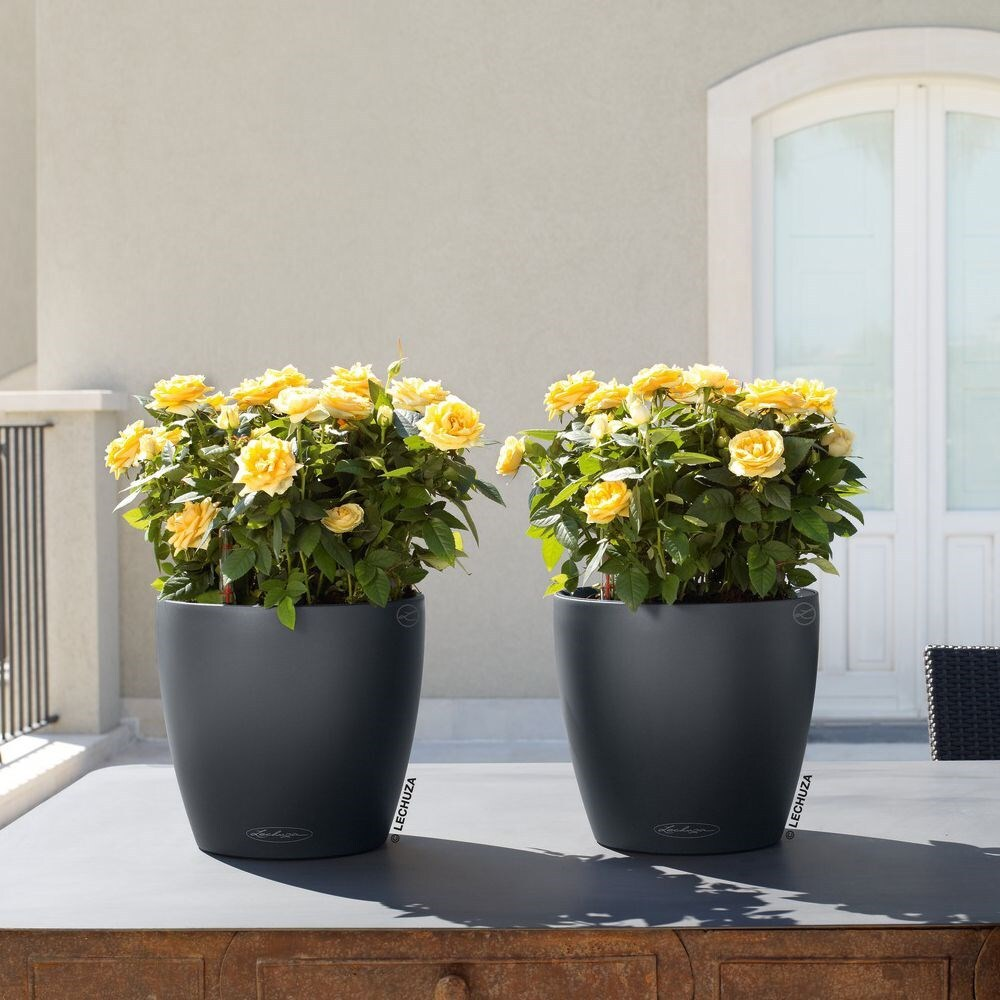 Lechuza Shop Buy Lechuza Classico Colour Planter Slate Delivery By Waitrose
