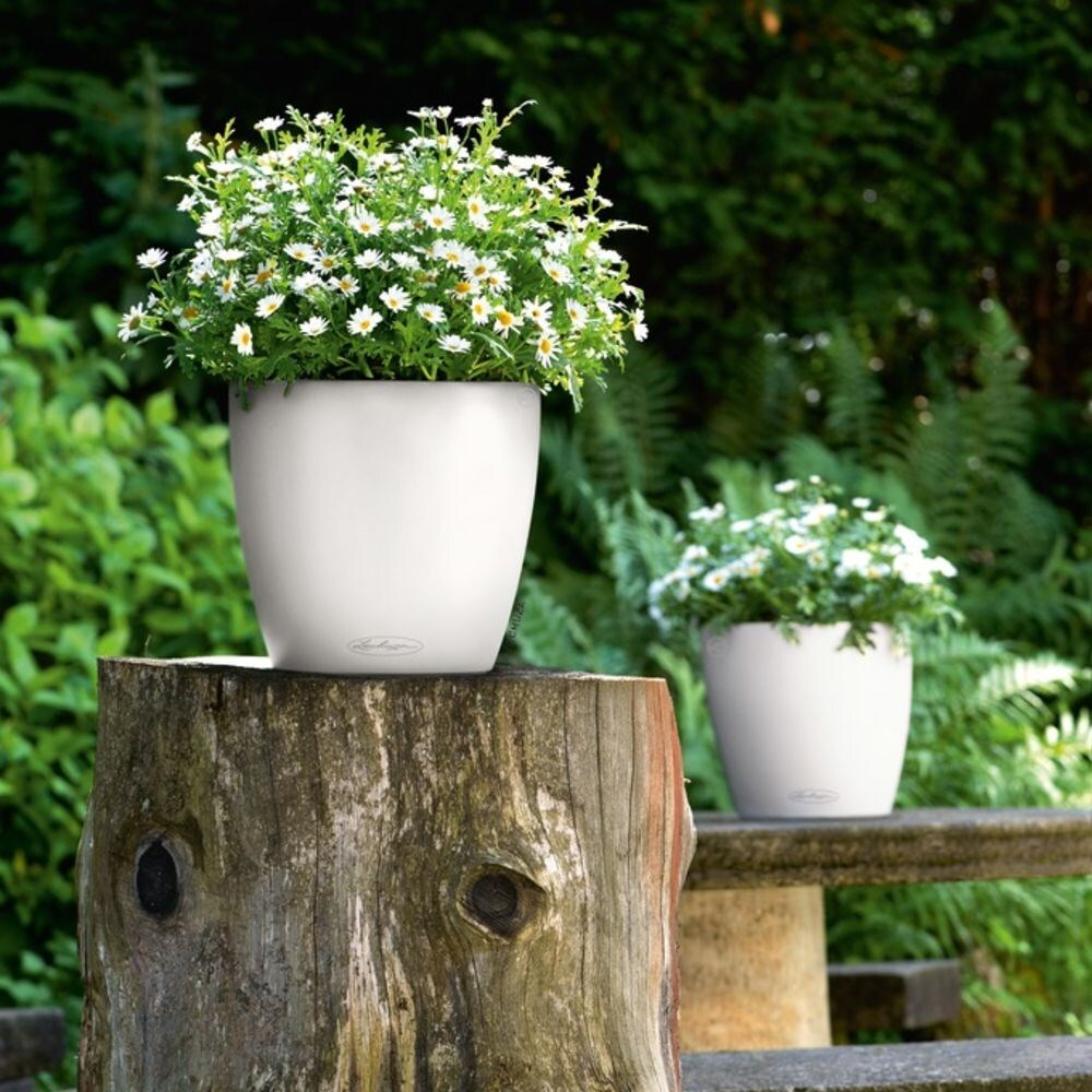 Lechuza Shop Buy Lechuza Classico Colour Planter White Delivery By Waitrose