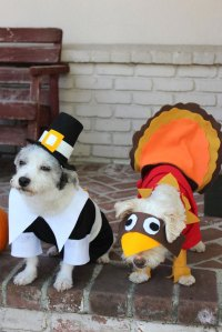 How To Make A Pilgrim Costume For Your Dog | Cuteness