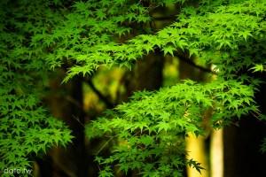 [夏.京都2-4]比叡山延曆寺:橫川