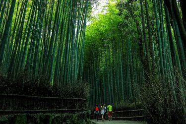 [夏.京都3-3]嵐山竹林
