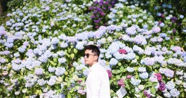 釜山|太宗台繡球花慶典 - 一年一度的釜山粉嫩繡球花海,初夏必訪景點及交通方式