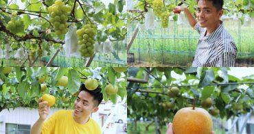 常陸太田|水梨、葡萄 夏季採果體驗 - 茨城行程推薦,常陸太田的水果真的太甜!