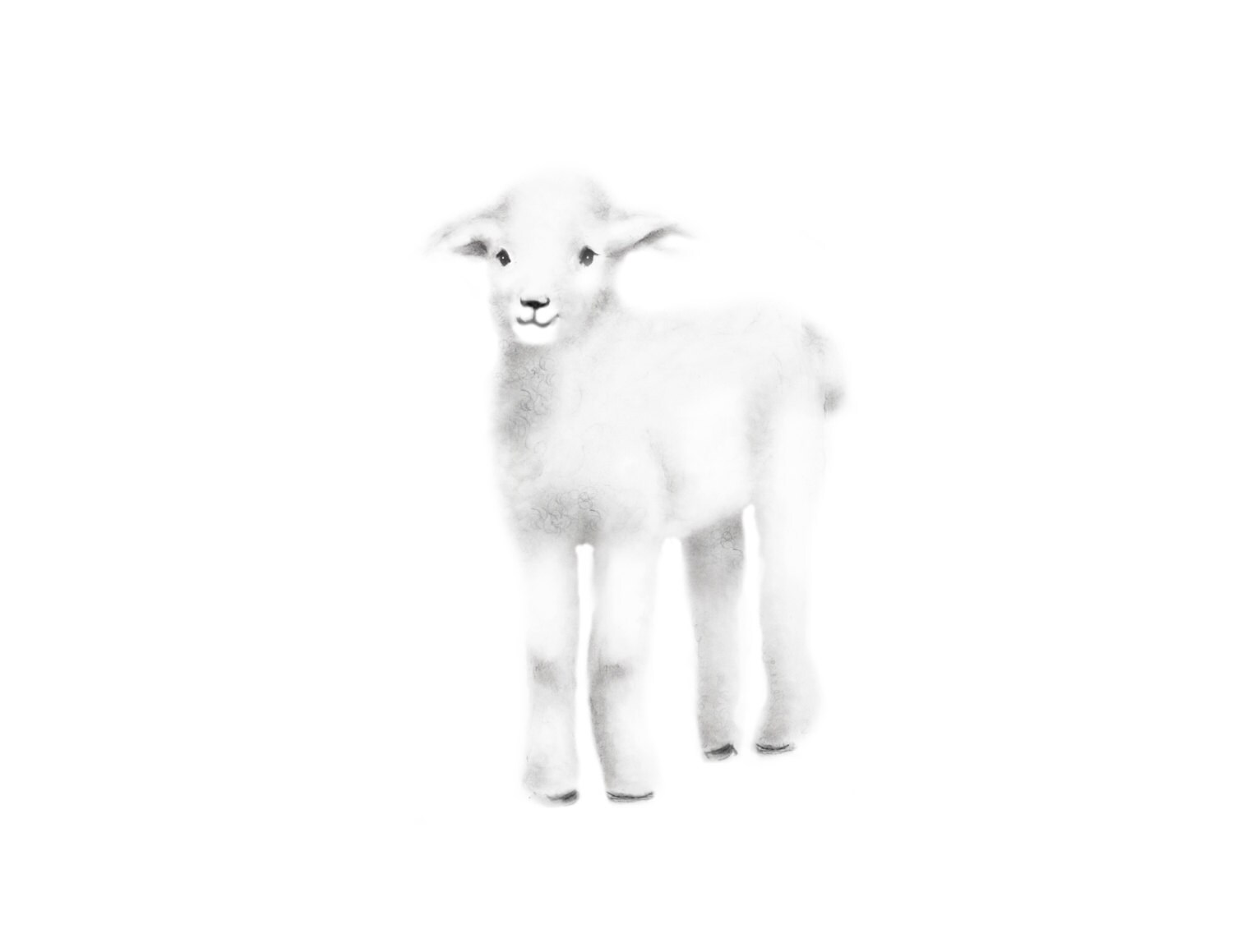 Baby Lamb Drawing Lamb Nursery Art Baby Lamb Pencil Drawing Nursery Decor