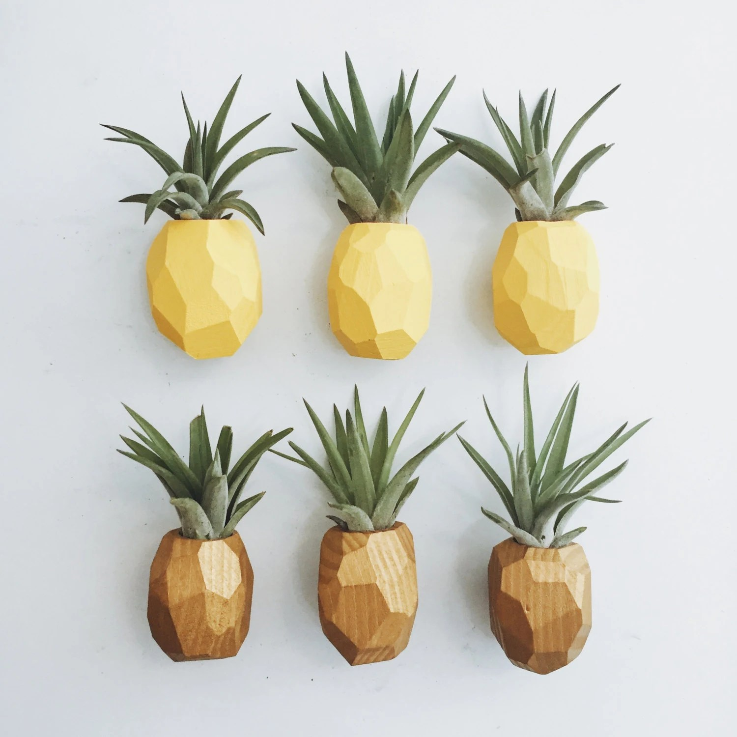 Pineapple Air Plant Magnet w\/Air Plant - door hanger design template