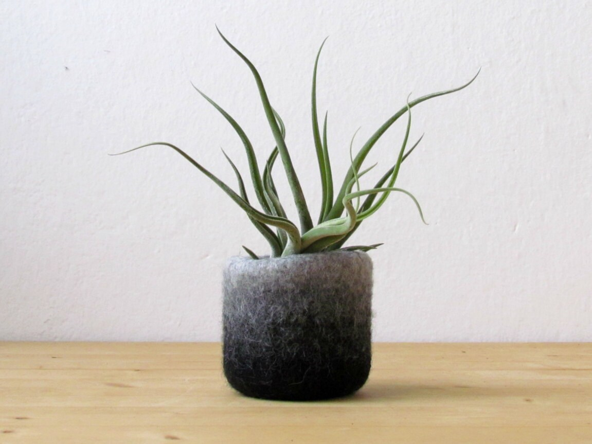 Cubicle Plant Holders Air Plant Holder Cubicle Decor Coworker Gift Desk