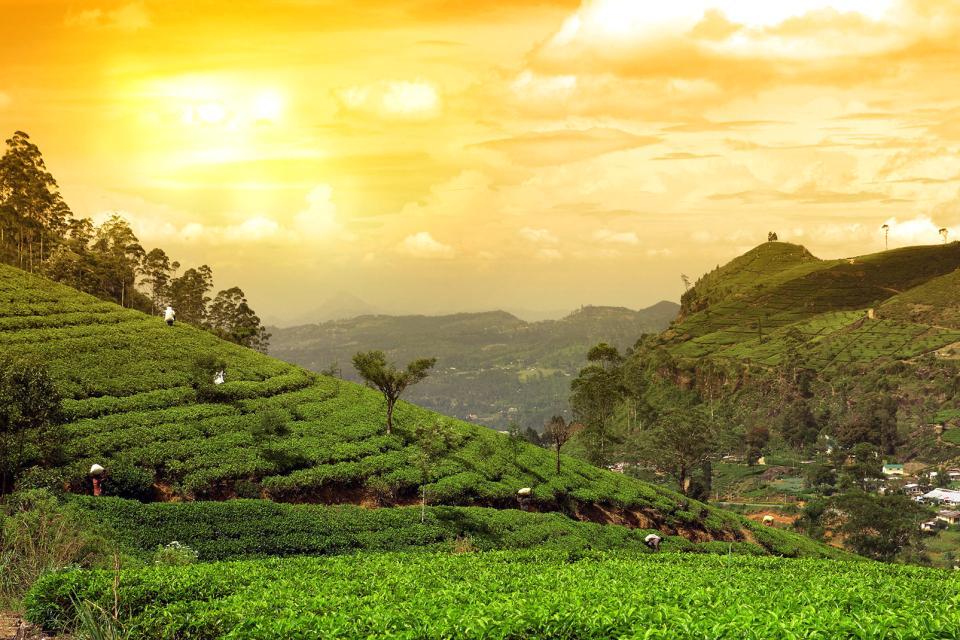 Ooty Hd Wallpapers Le Piantagioni Di T 232 Sri Lanka