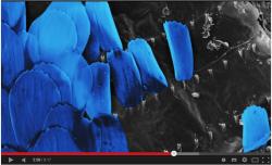 borboleta microscopio electronico varrimento
