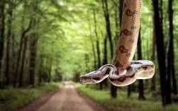 Cobra Snake Wallpaper FCiências 9