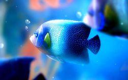 Peixe Dish Wallpaper FCiências 6
