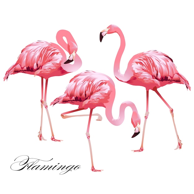 Animated Heart Wallpaper Flamingo Vectors Photos And Psd Files Free Download