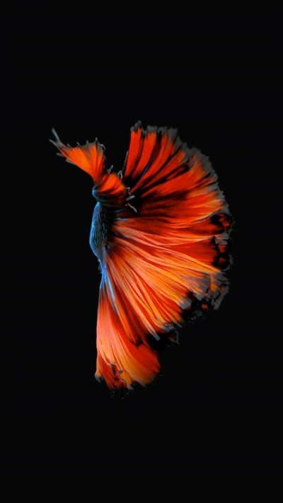 How to Get Apple's Live Fish Wallpapers Back on Your iPhone « iOS & iPhone :: Gadget Hacks