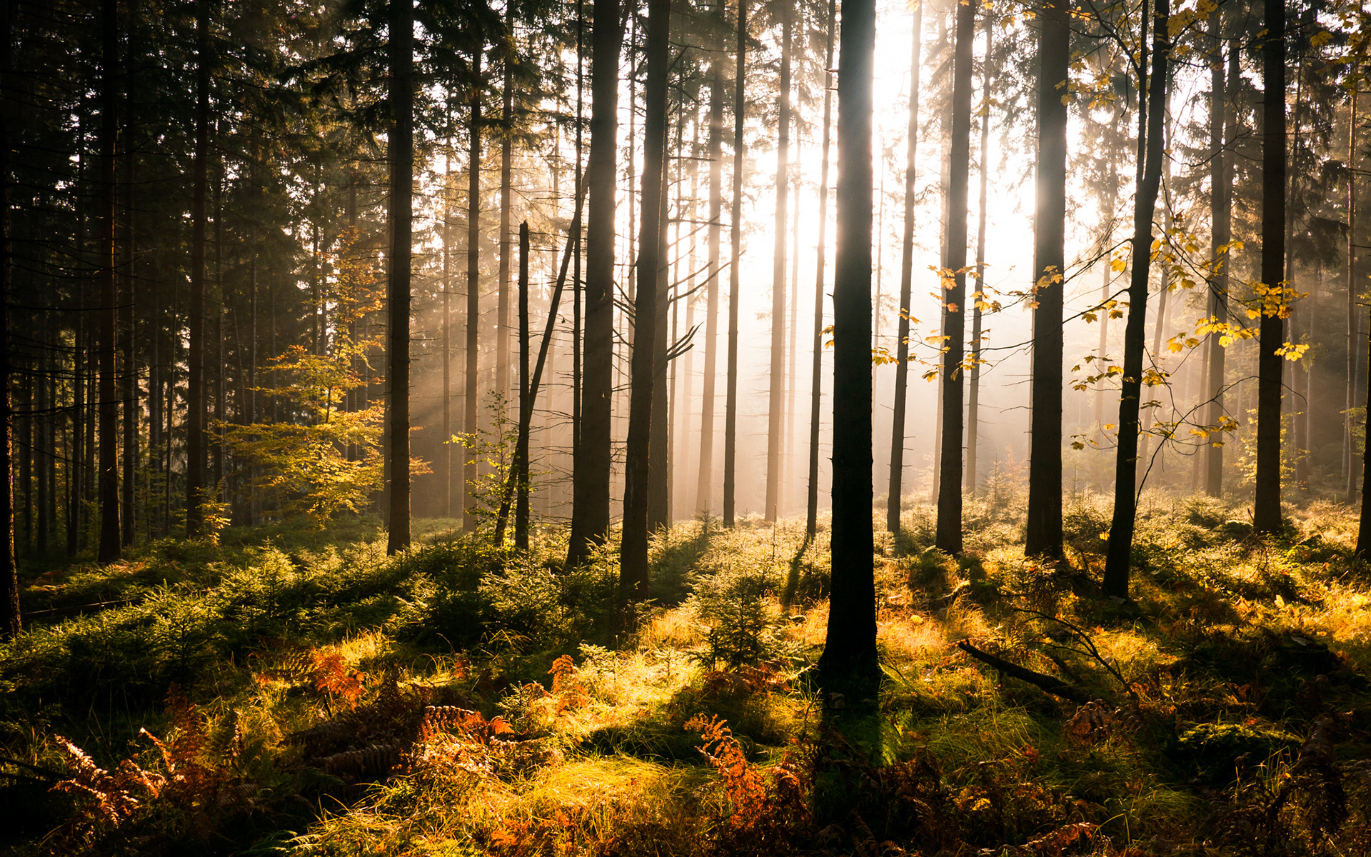 Canvas Hi Beautiful 3d Wallpaper Weekly Wallpaper Take A Walk Through The Forest