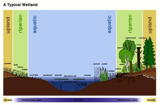 GC5HBXP Quick\u0027s Bottom / Viaduct Flats Wetlands\u2026 HAGXI (Earthcache