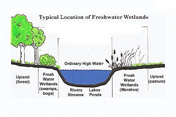 Wetland Diagram Wiring Schematic Diagram