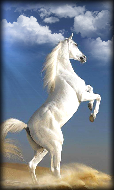 Best 3d Live Wallpaper Android 2015 Free Horse Live Wallpaper Horse Apk Download For Android