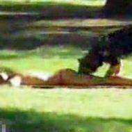 【エロ注意】女性のアソコを狙う変態犬がすごすぎるw