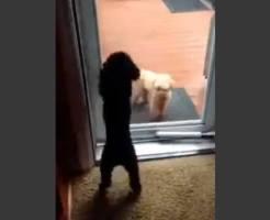 【萌え注意】仲間のためにドアを開けてあげる犬がイケメンすぎるwww