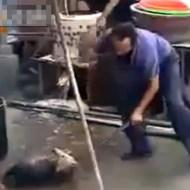 【グロ動画:犬】中国の犬養殖場の実態・・・これはあかんやつや・・・
