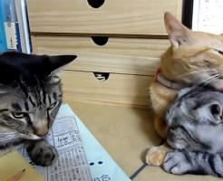【萌え動画:猫】カップルの横にいるぼっち猫の気まずい顔がやばいwww