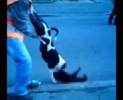 【グロ動画:犬猫】猫の首に噛みついて離れない凶暴な犬(・`д・´)