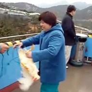 【閲覧注意:中国】生きた鶏にロープっをつけて虎に投げる・・・民度低すぎるw