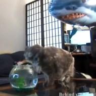 【萌え動画集】びっくりして猫パンチ!からの~びっくりする!動画集