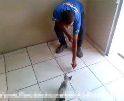 【閲覧注意】Facebookで猫を蹴る映像をクズがアップしてる・・・