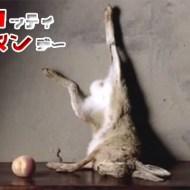 【グロ動画】蛆虫の死体処理能力が半端じゃない!?