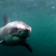 【閲覧注意】海に飛び込んだらサメが目の前に!!