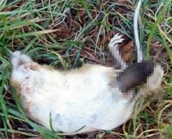 【グロ注意】ネズミの死体見てたらお尻からでっけえナニカが出てきた・・・