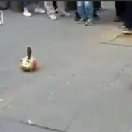 【神業動画】チップを貰って貯金箱へ!天才過ぎる鳥パフォーマーwww