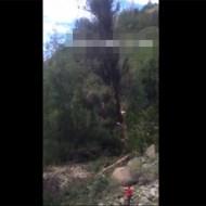 【衝撃映像】大木が倒れる瞬間・・・逃げ遅れた女性が・・・
