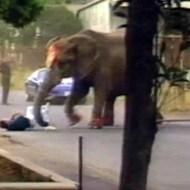 【衝撃映像】サーカスのゾウの怒り爆発!人を襲いながら街へ飛び出して暴走!
