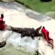 【衝撃映像】動物の逆襲動画集!本気になったら人間なんかゴミレベルw